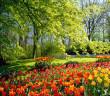 Giardini primavera