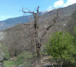 Casa sul albero